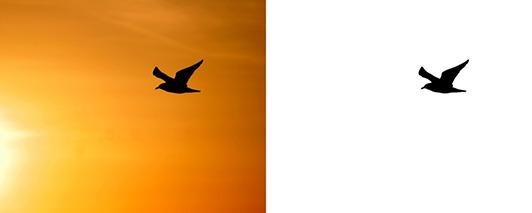 Exemple de détourage d'un oiseau avec la baguette magique