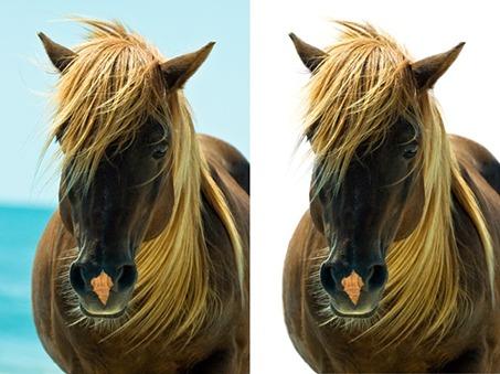 Exemple de détourage de la crinière d'un cheval avec la fonctionnalité Améliorer le contour