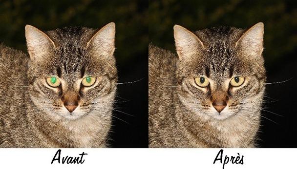 Résultat de suppression des yeux verts ou jaunes sur une photo